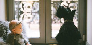 baby beside scottish terrier 1619494