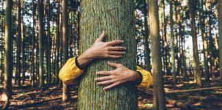 deforestation stop prevent help